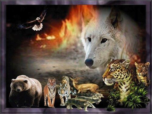 Животный мир... 0_56be9_b06bb36b_L