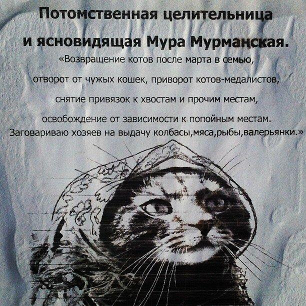 Тем временем в Мурманске